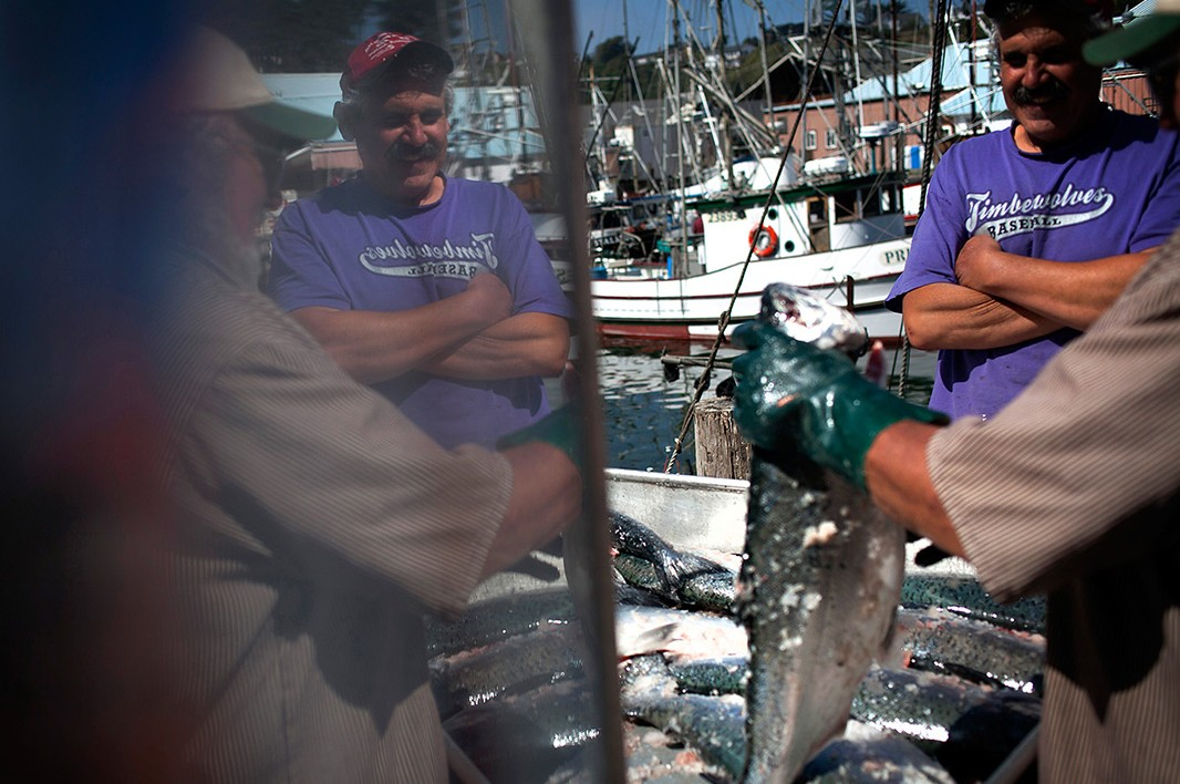 Fisherman Brian Jourdain, back from chasing great schools of the fish up the California coast, smiles as salmon are unloaded from his boat.
