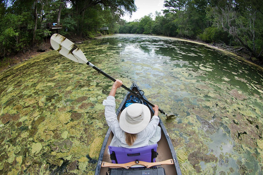 A toxic algae outbreak on the Santa Fe River in May 2012.