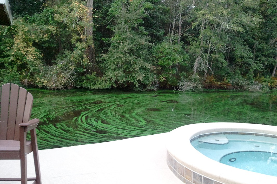 A fluorescent green toxic algae outbreak on St. Johns River on November 12, 2013.