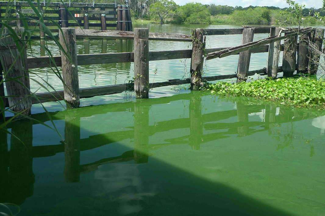 A toxic algae outbreak on southwest Florida's Caloosahatchee River in June of 2011, turned the water a freakish green, killed fish, and released a nauseating stench for weeks.