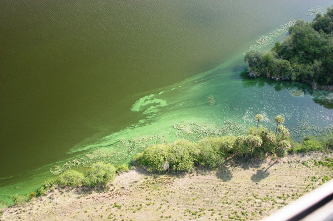 A toxic algae outbreak on southwest Florida's Caloosahatchee River in June of 2011 covers the area with green slime.