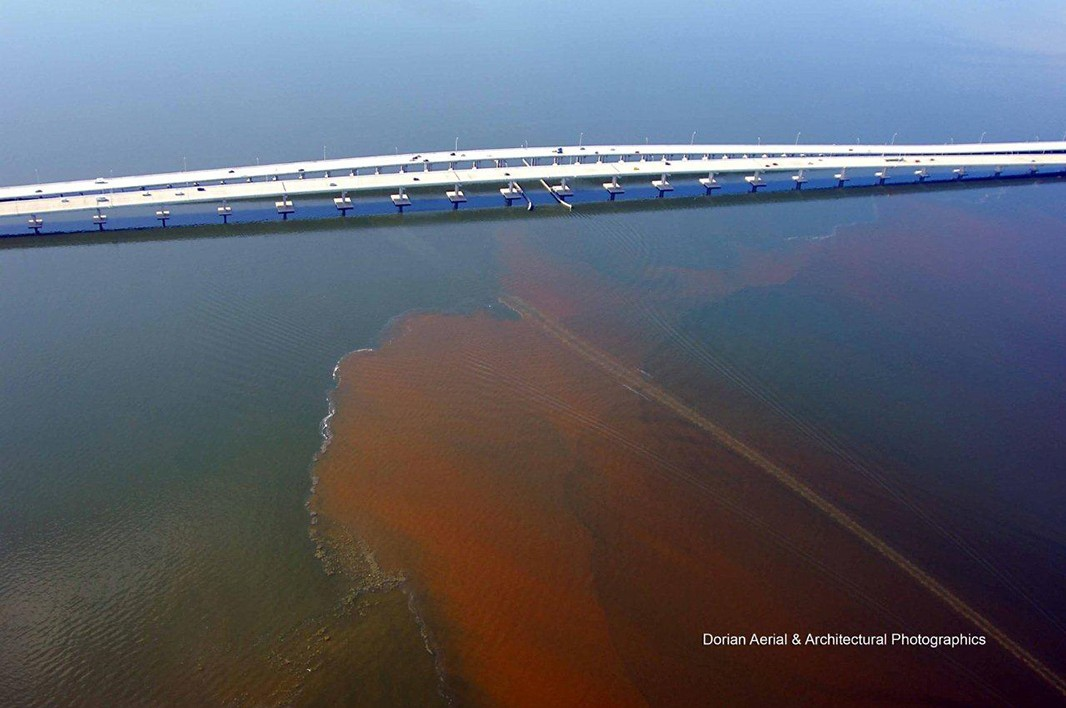 A large August 2011 algae outbreak on Tampa Bay.