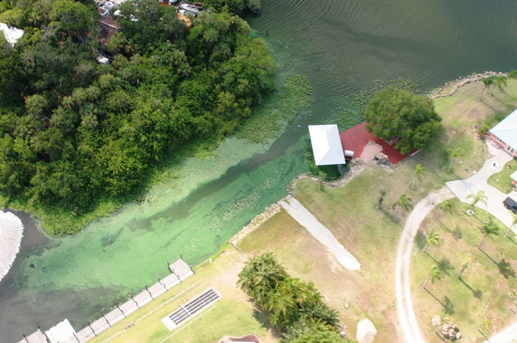 A toxic algae outbreak on southwest Florida's Caloosahatchee River in June of 2011 fouls waterfront property.
