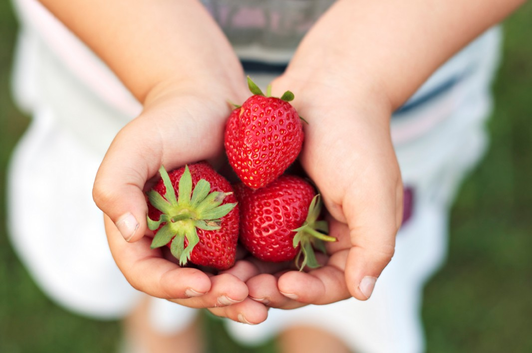 A child holds some strawberries. (iStockphoto)