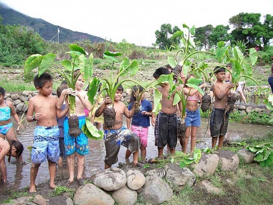 Schoolchildren learning the significance of kalo in the Native Hawaiian culture at the Pellegrino family's Noho`ana Farm.