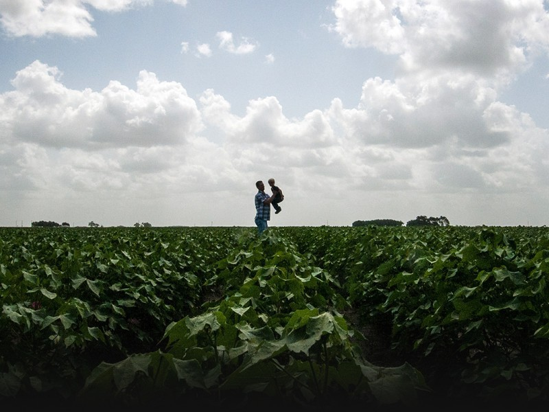 A father and son in a cotton field in El Campo, Texas. Chlorpyrifos is widely used on cotton. The EPA has acknowledge its legal obligation to protect children from pesticide drift.