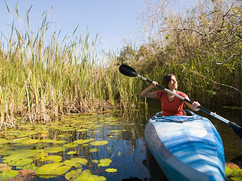 Kayaking through the Everglades.