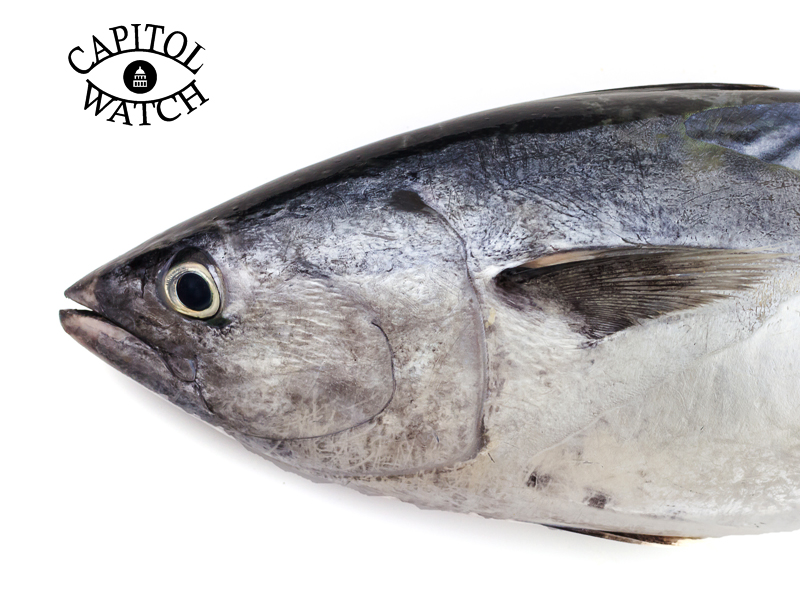 A scott pruitt appointment means more mercury in our fish for How much mercury is in fish