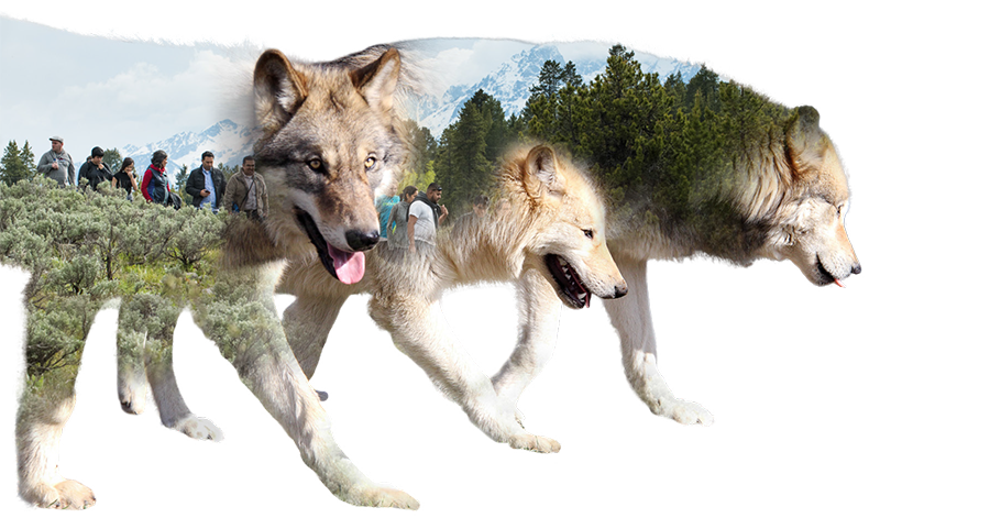 Wolves graphic of the value 'Inclusion.'