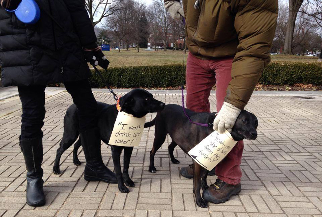 Dogs protesting the water quality.